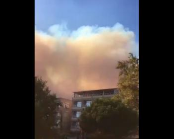 Marmara Adası'nda orman yangını