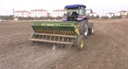 Ankara Büyükşehir Belediyesi'nin kiraladığı Atatürk Orman Çiftliği arazisi tohumla buluştu