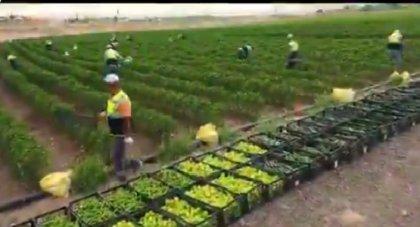 Ankara Büyükşehir Belediyesi'ne ait kullanılmayan tarım arazilerinde üretim başladı