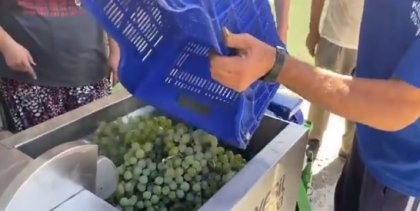 Antalya Büyükşehir'den üzüm üreticilerine destek