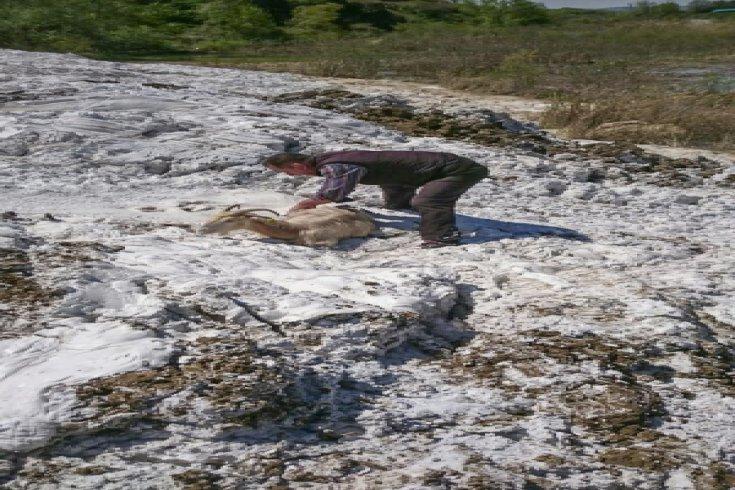 CHP'li Sarıbal: Fotoğraflar doğa katliamının kanıtı