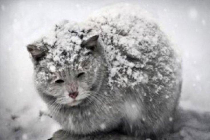 Soğuk havalarda sokak hayvanları