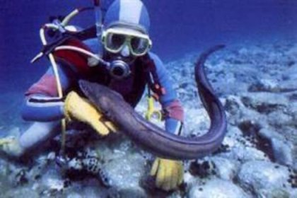 Doğal akvaryum: Saros Körfezi