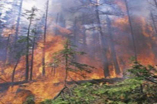 Antalya'nın ciğerleri yanıyor