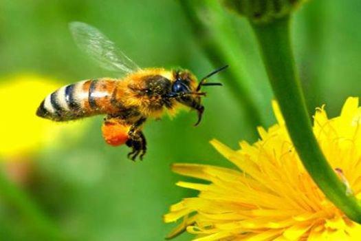 'Arıları kıyıma' devam