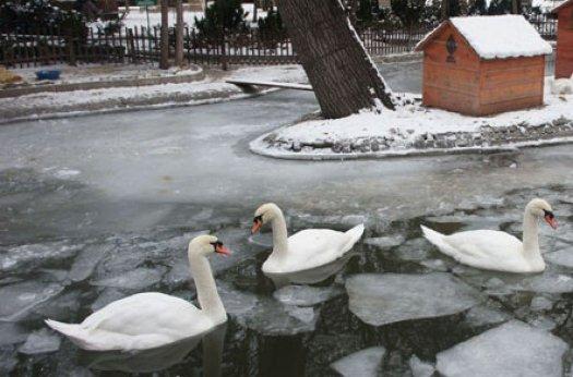 Kuğulu Park buz tuttu!