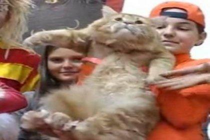 10 kiloluk kedi ilgi odağı oldu