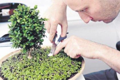 Avuç içi kadar minyatür bahçe