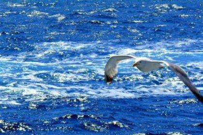 Balık ağlarındaki kuşlar