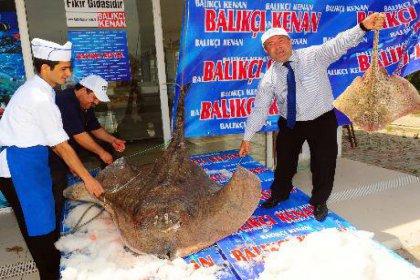 Balıkçılar dev vatoz yakaladı