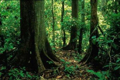 Dünyayı ormanlar koruyor