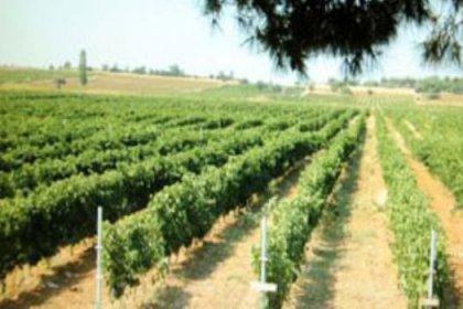 En iyi şarap için 12 milyon dolar yatırdı
