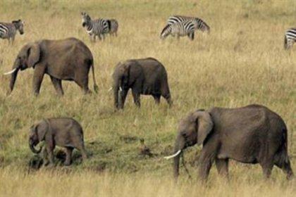 Filler sıcaktan ölüyor