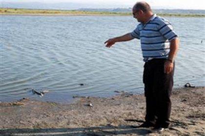 Gelibolu sahili ölü balıkla doldu