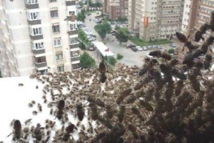 Kadıköy'de 2. arı krizi!