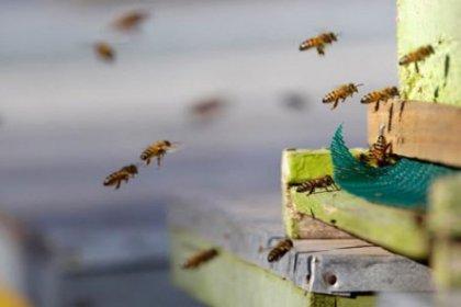 Kadıköy'de arı istilası