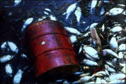 Karadeniz'in biyolojik yaşamı tehdit altında