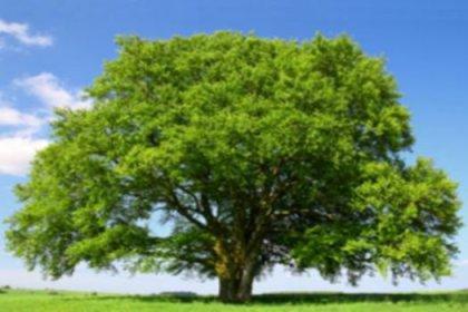 Kayın ormanları yılda 68 ton toz emiyor