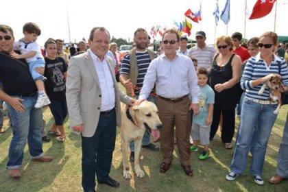 Köpek Irkları Silivri'de Yarıştı!