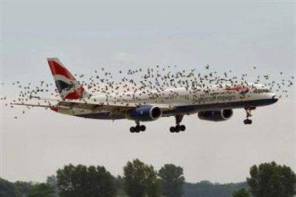 Kuşlarla uçaklar çarpışınca
