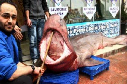 Marmara'da Jaws yakalandı