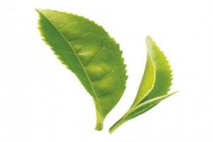 Metabolizmayı hızlandıran 7 bitki
