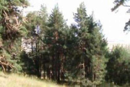 Ödemiş'e 150 Hektarlık Bal Ormanı Kuruluyor