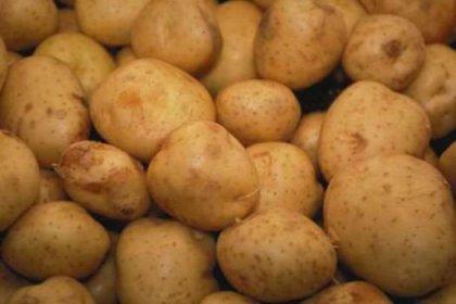Patates, pancar ve soğan üreticisi don mağduru