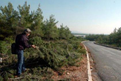 Üniversitede ağaç katliamı