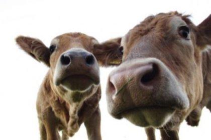 Yaban ineklerine koruma talebi