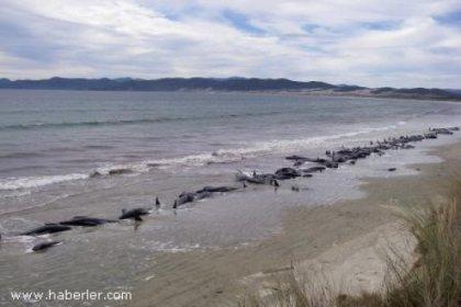 Yeni Zelanda'da Balinalar Sahile Vurdu