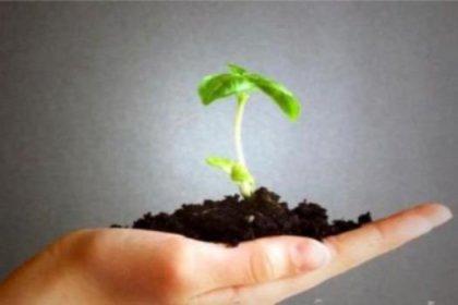 Yerel tohumlar koruma altına alınıyor