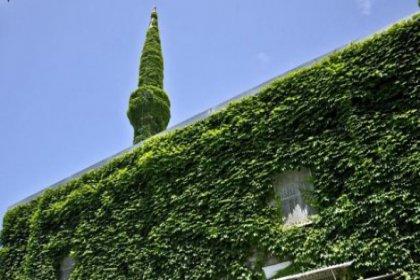 Yeşil Cami rengine kavuştu