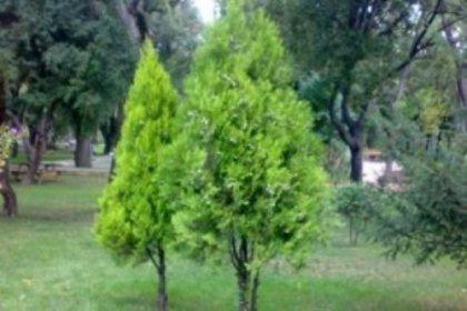 Yol gürültüsü ağaç dikerek engellenecek