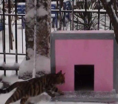 Kedi evi yapmak istediği için komşusu tarafından öldürüldü
