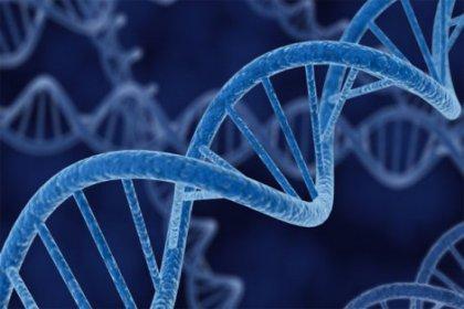 Tarihin en geniş gen araştırması başlıyor: 1 milyon gen 'didiklenecek'