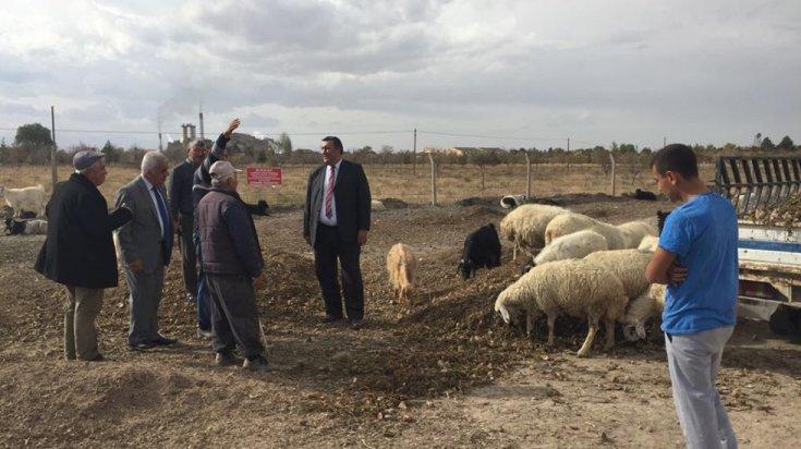 300 koyun projesi havada kaldı: 121 bin kişinin başvurduğu projeden sadece 7 bin 442 yetiştiriciye onay çıktı