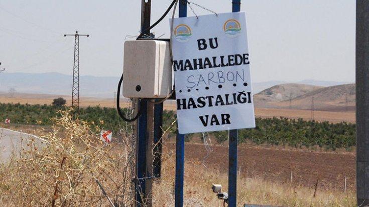 Diyarbakır'daki sağlık örgütleri: Bir çocuk şarbondan öldü, vakaların artma ihtimalinden endişeliyiz