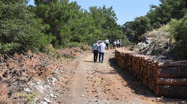 İzmir'de kalker ocağı için çok sayıda çam ağacı kesildi