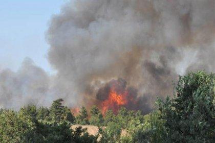 2015'ten bu yana 29 bin hektar ormanlık alan yandı