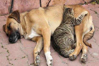 257 kişiye hayvan hakları ihlalinden para cezası