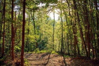 1.6 milyon metrekare alan 'orman vasfından' çıkarılıp talana açıldı