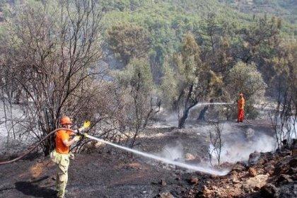 Antalya Gazipaşa'da orman yangını
