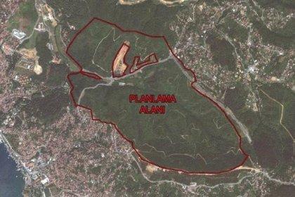 Beykoz'da 554 villaya izin çıktı: En az 5 bin ağaç kesilecek