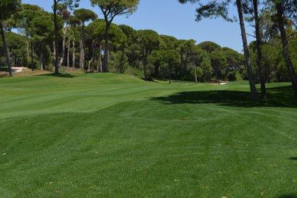 Beykoz'da ormanlık alan 'golf sahası' için imara açılıyor