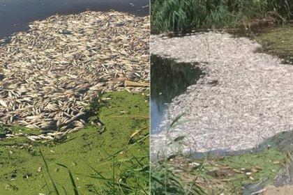 Büyük Menderes Nehri'nde toplu balık ölümleri yaşanmaya başladı