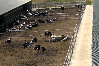 Çiftçi borç batağında: Çiftlikler birer birer satılıyor