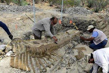 Çin'de 174 milyon yıllık dinozor fosili ortaya çıktı