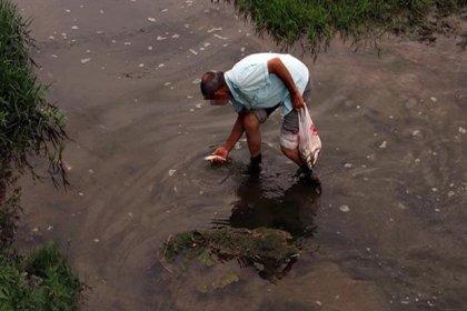 Düzce'de korkutan balık ölümleri