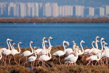 Flamingoların hukuk zaferi: Körfez Geçiş Projesi hakkında yürütmeyi durdurma kararı verildi